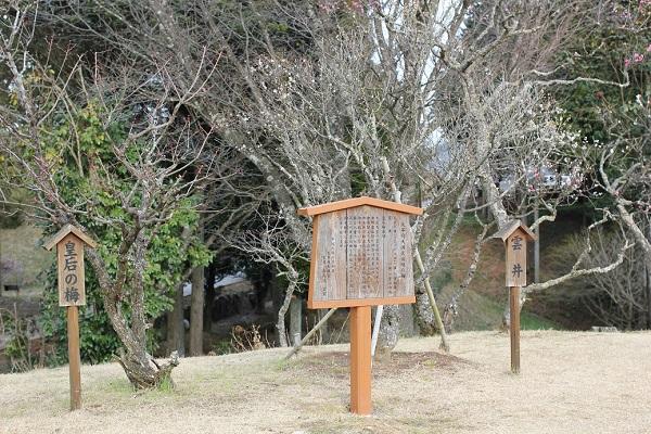 太宰府天満宮より寄贈された2本の梅の写真