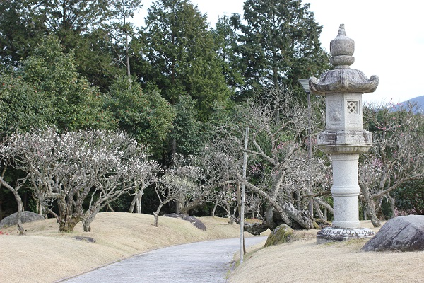 みゆき梅林園の庭園と白梅の写真