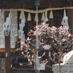 梅園身代り天満宮と梅の写真