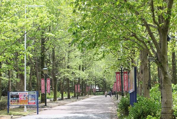 パレスハウステンボスへ続く並木道の写真