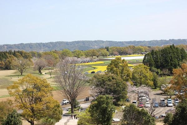 宮崎県立西都原考古博物館の3階の展望所からの風景写真(菜の花)