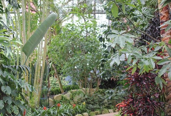 観賞用温室の内部、南国の植物の様子の写真