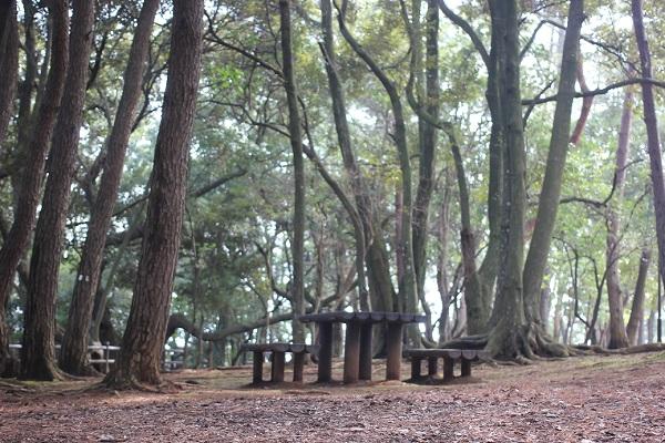 玖島崎キャンプ場の林の中のベンチの写真