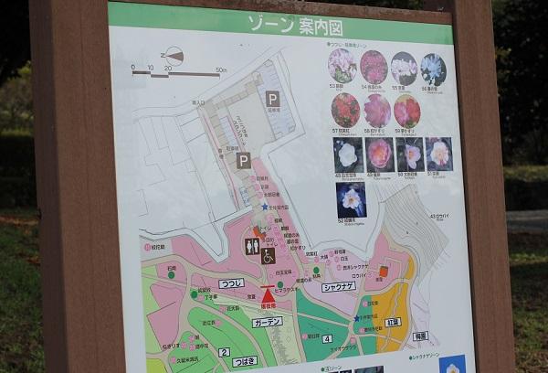 「久留米つばき園」の園内案内看板の写真