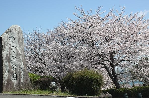 のぞみ公園の入り口の桜の写真