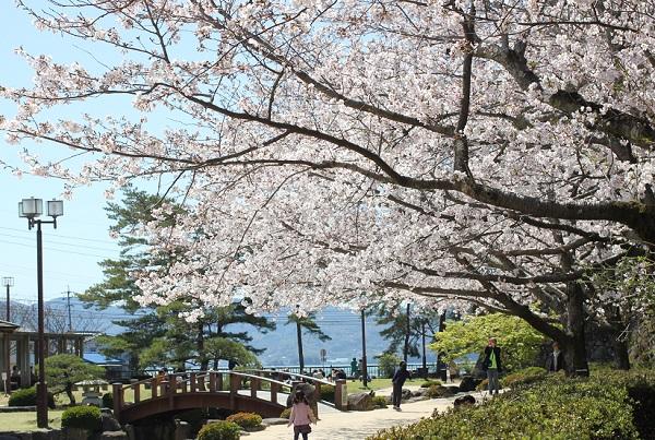 大村公園、南堀に咲くソメイヨシノの写真