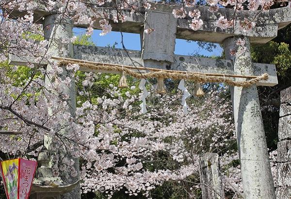 大村公園、神社方面に向かう鳥居とソメイヨシノの写真