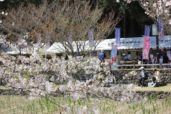 大村公園、長堀の菖蒲の葉と桜、出店の写真