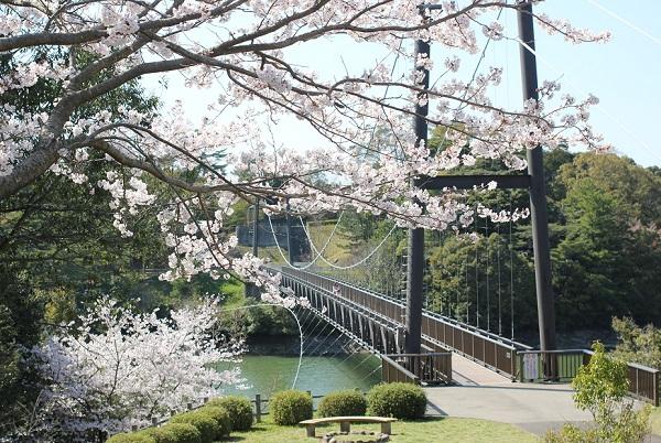 野岳大橋と桜の写真