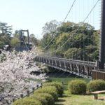野岳湖の橋と桜の写真