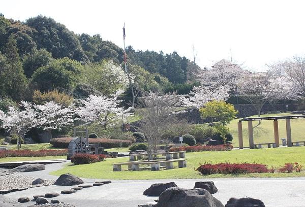 ソメイヨシノが咲いている水辺の広場の写真