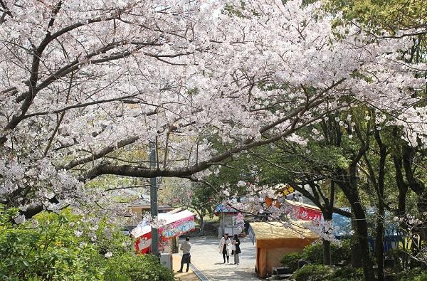 立山公園入り口付近の桜と屋台の写真