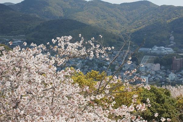 立山公園展望台から桜と街並みの写真