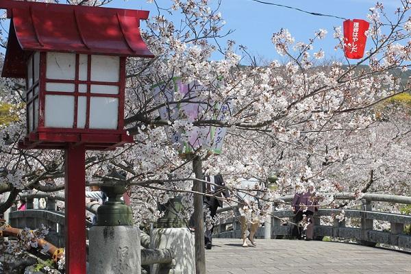橘神社の入り口の桜並木の写真