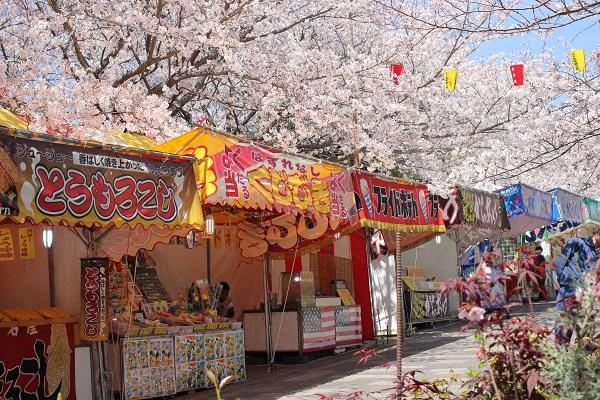 橘神社の参道、出店と満開に咲く桜並木の写真