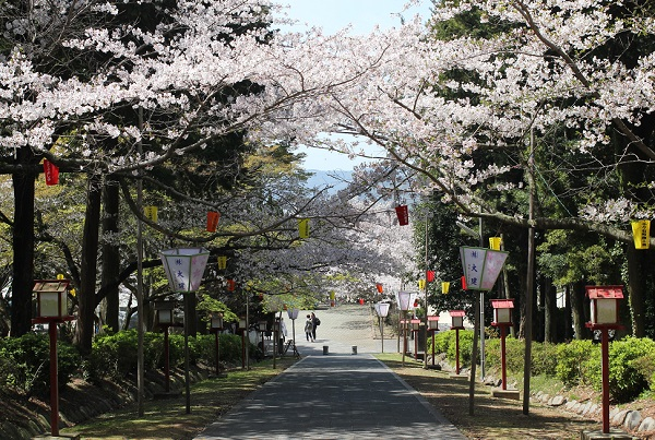 橘神社へ向かう参道と桜の写真