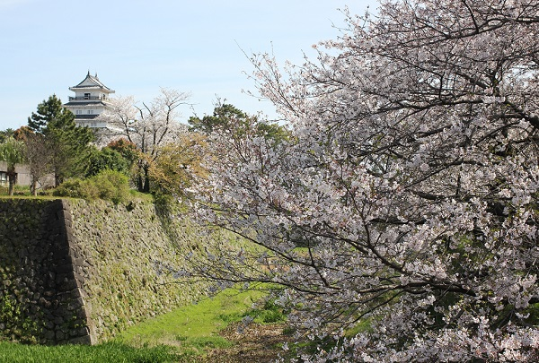 島原城の堀端の桜と天守閣の写真