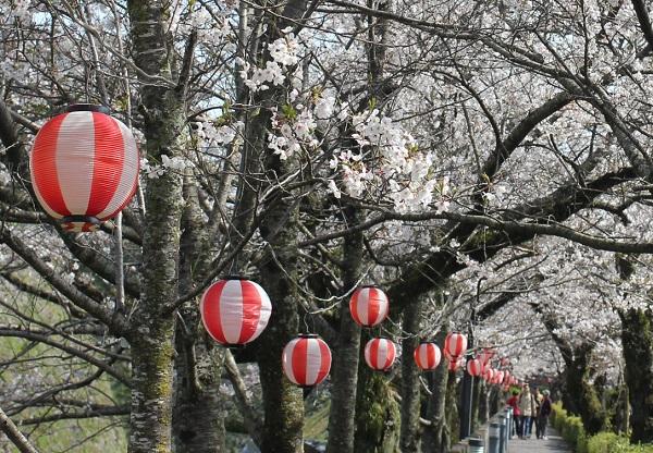 島原城堀端の桜のトンネルの写真