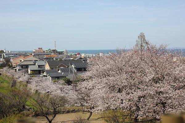 島原城内の桜と島原の街並み&有明海の写真