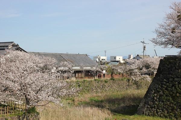 島原城の堀端の桜の写真