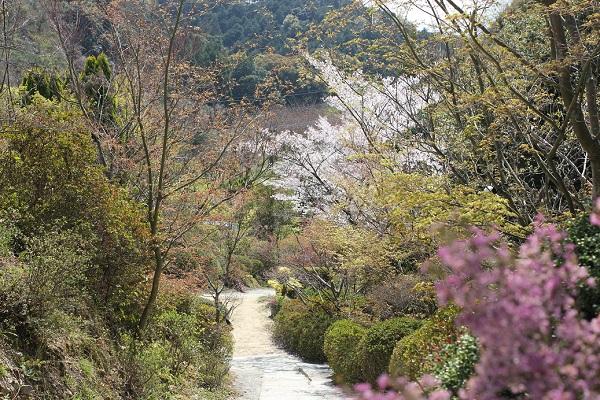Run.らん.ランの庭園の下り道、植木の写真