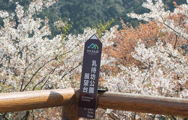 乳待坊公園の展望台、立て看板と桜の写真