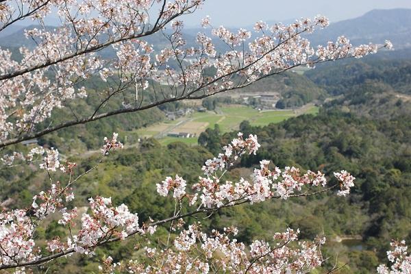 乳待坊公園の展望台からの景色写真(桜と山内町の町並み)