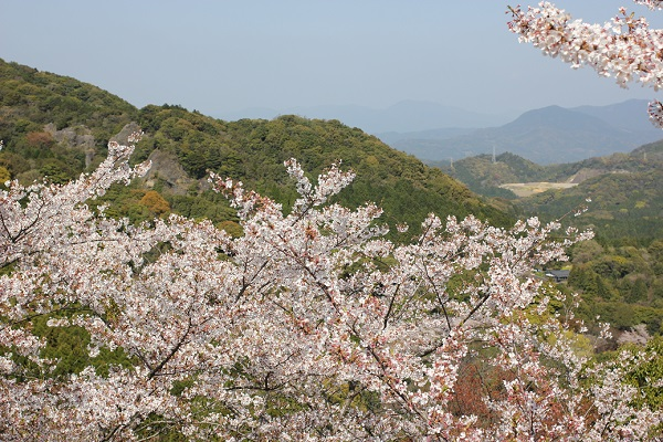乳待坊公園の展望台からの景色写真(桜と山々)