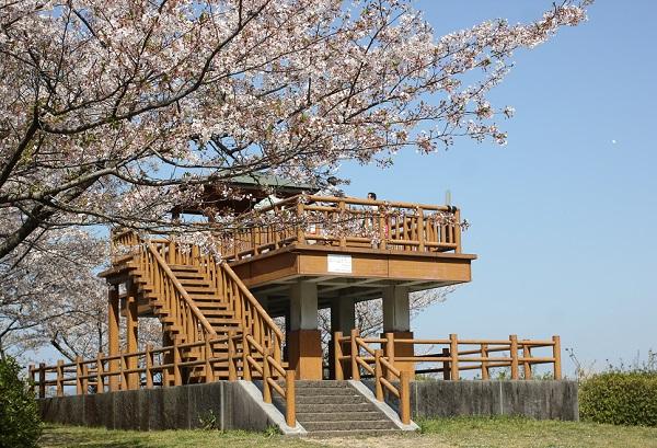 乳待坊公園の展望台と桜の写真