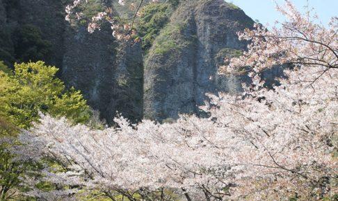 乳待坊公園の絶景、桜と岩の景色の写真