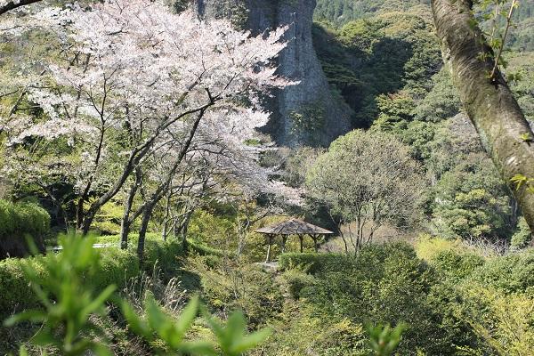 乳待ち坊公園の駐車場から見えた奇岩と桜、ベンチの写真