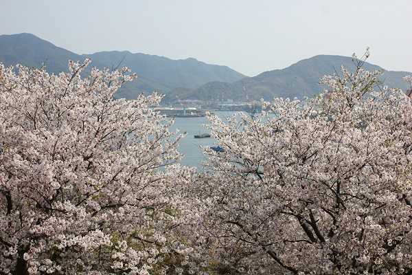 神の島公園の桜と展望所からの景色写真(香焼方面)