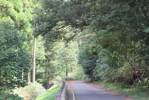シャクナゲの里付近の山道の写真