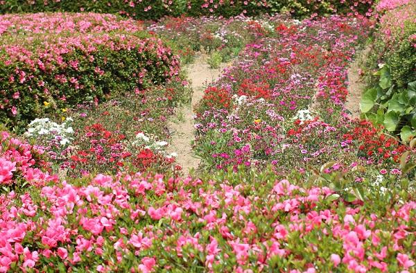 能古島アイランドパーク、ツツジとナデシコの花壇