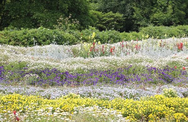 能古島アイランドパーク、爽やかな色合いの花壇の写真