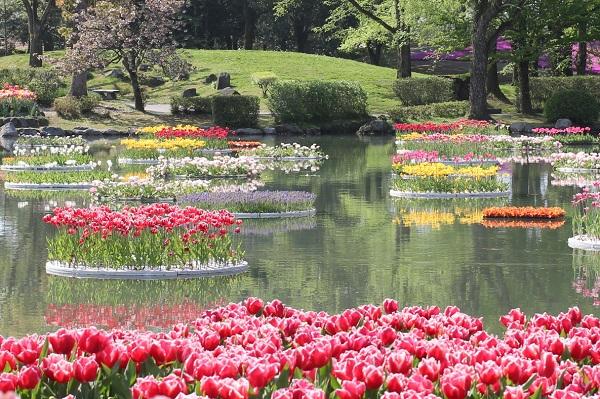 となみチューリップフェアの水上花壇、美しく咲くチューリップの写真