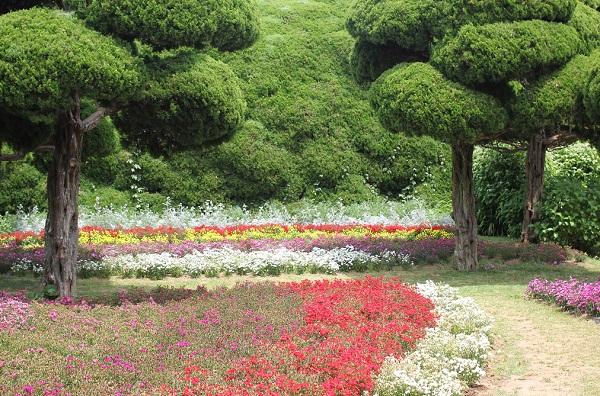 能古島アイランドパーク、色合いがステキな花壇の写真