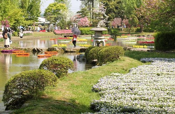となみチューリップフェア、水上花壇と白いビオラ園の写真