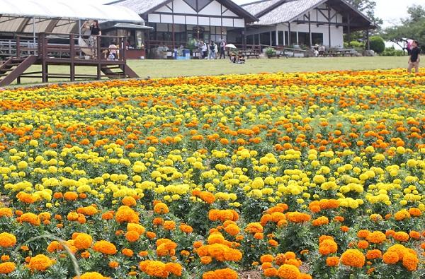 能古島アイランドパークのパノラマ園、マリノア畑とレストランの写真