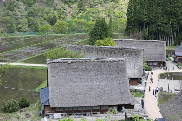 国道156号から見下ろした菅沼合掌造り集落と田んぼと山の写真