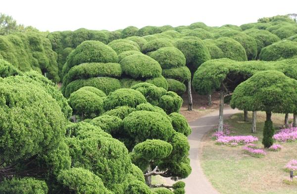 能古島アイランドパーク、カイズカイブキの並木道の写真