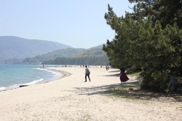 天橋立、海と白い砂浜と松並木の写真
