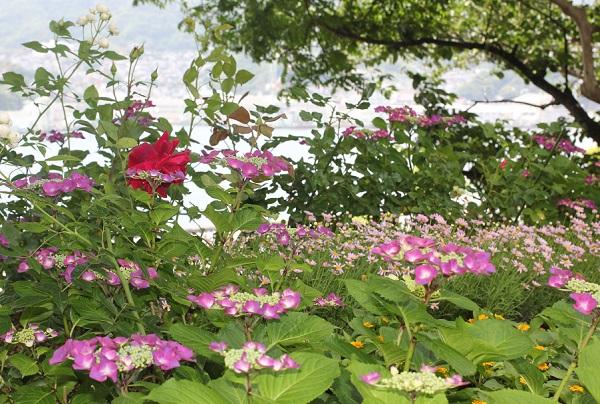 三浦環・プッチーニ像前、海側、紫陽花がある花壇の写真