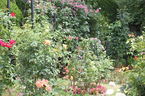 グラバー園、旧リンガー住宅のバラ園の写真