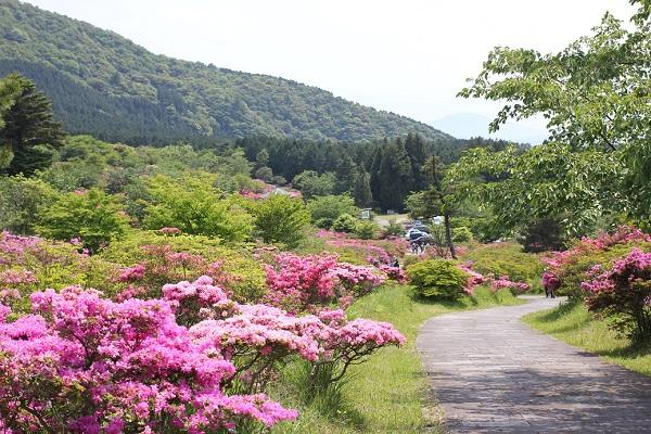 宝原つつじ公園、ミヤマキリシマや山が望める遊歩道