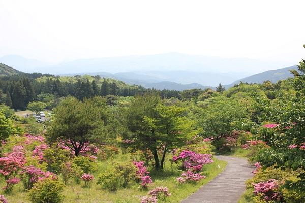 宝原つつじ公園、休憩所の高台から見た風景写真(ミヤマキリシマや山々)