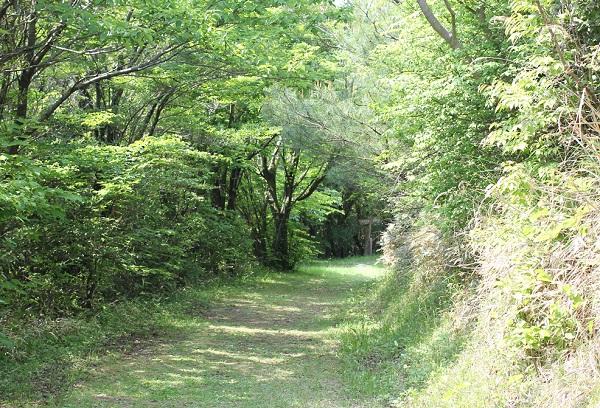 宝原つつじ公園、パノラマ展望台へ続く緑の小道の写真