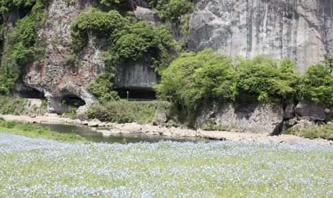 本耶馬渓のネモフィラフェスティバル、青の洞門前のネモフィラ畑の写真