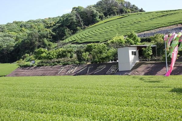 千財農園に隣接している千財バラ園の写真