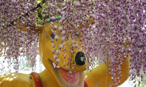 千財農園の藤とキャラクターの写真